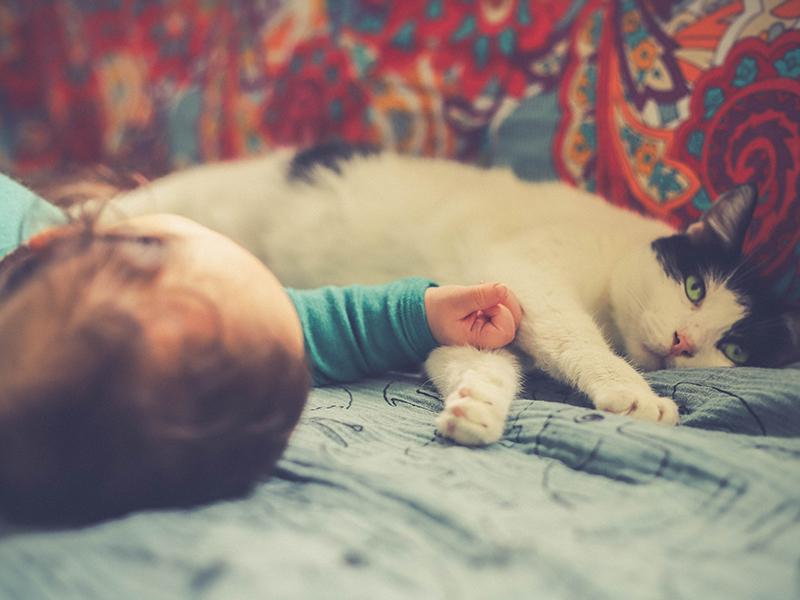 I bambini autistici preferiscono i gatti: lo studio